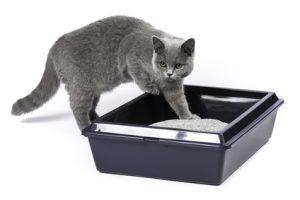 Katze auf dem Katzenklo, Katzentoilette